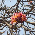 arbre fleurs 1